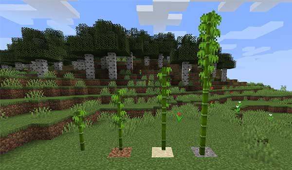 Imagen donde podemos ver los tamaño del bambú en Minecraft
