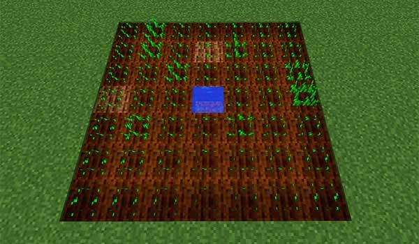 imagen donde vemos tierra de cultivo con semillas de trigo recién plantadas.