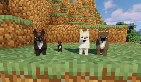 Imagen donde podemos ver cuatro perros de la raza chihuahua que añade el mod More Dogs 1.15.2.