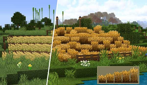 Imagen donde podemos ver una comparación entre un campo de trigo con y sin el paquete de texturas Stay True 1.16, 1.15 y 1.14.