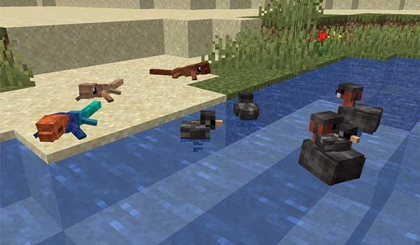 Imagen donde podemos ver los lagartos y las zampullines que añade el mod Creatures and Beasts 1.16.3, 1.16.4 y 1.16.5.