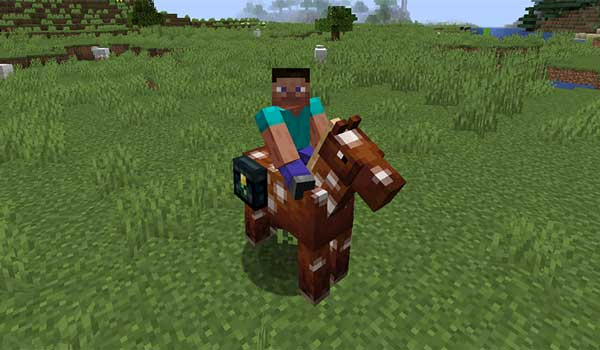 Ender Chested 1.16.3 y 1.16.4