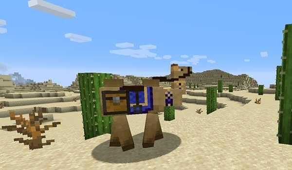Camels 1.16.1, 1.16.2, 1.16.3, 1.16.4 y 1.16.5