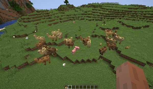 Imagen donde podemos ver un grupo de camellos, del mod Camels 1.16.1, 1.16.2, 1.16.3, 1.16.4 y 1.16.5, en el bioma de pradera.