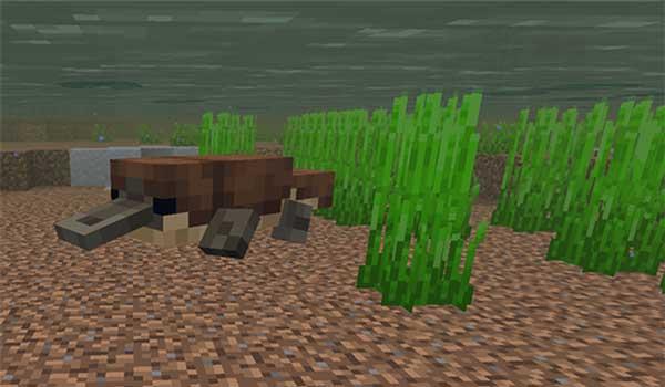 Imagen donde podemos ver un ornitorrinco nadando en un pantano, gracias al mod Animal sin nombre 1.16.5.